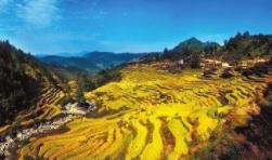 融水县灵睿生态农业有限公司创业孵化基地